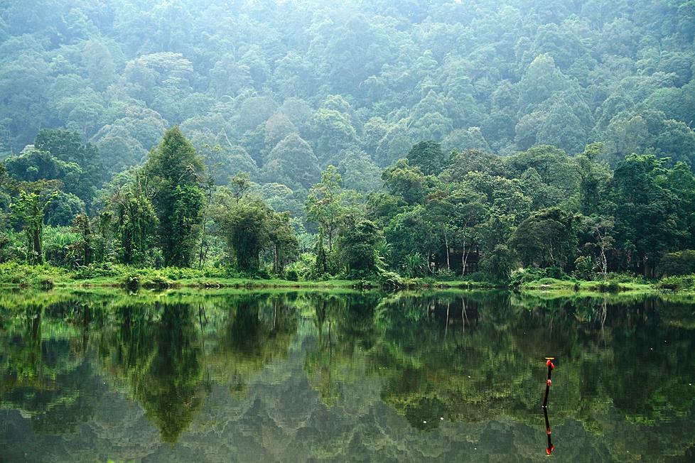 Hasil gambar untuk gambar hutan