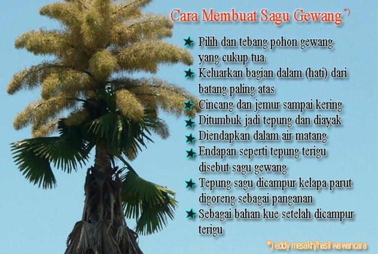 Ajak Jokowi Makan Putak Warga Tts Sindir Pemerintah Ntt Halaman All Kompasiana Com