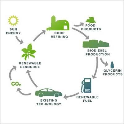 Bioenergi Sumber Energi Alternatif Yang Mendunia Oleh Ina Tanaya