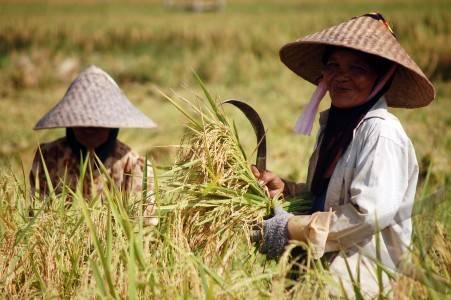 Miskin Tanah Subur Oleh Mardianto Mgl Kompasiana Gambar Petani