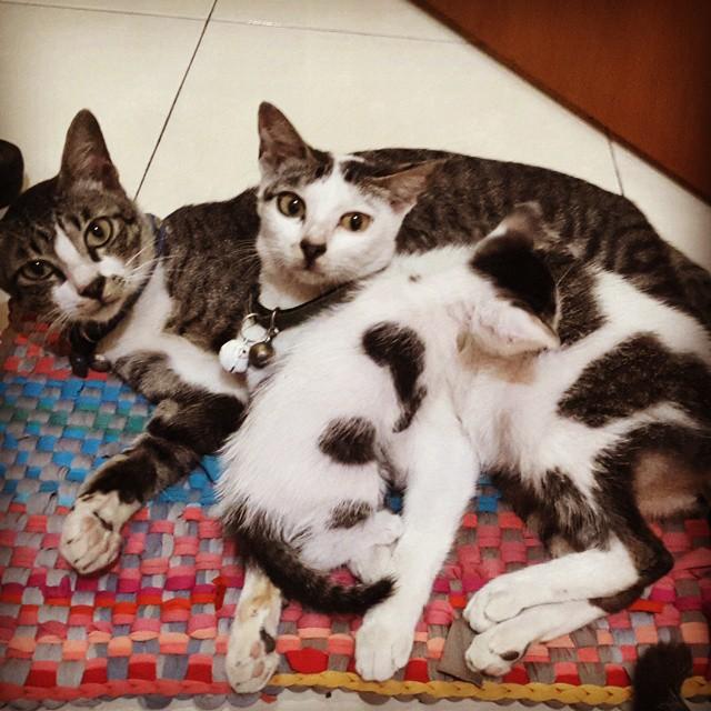 Merawat Kucing Nggak Selalu Mahal Lho 33d6b5e943