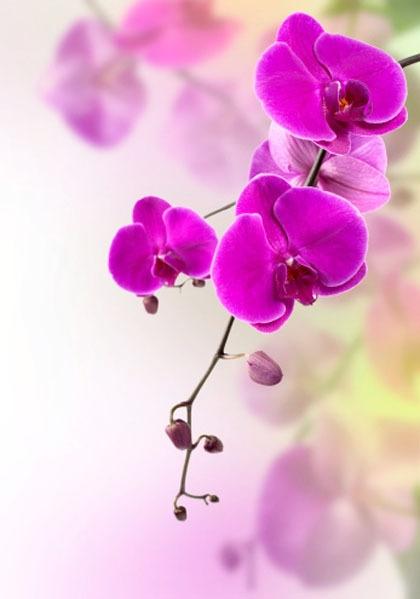 Setangkai Bunga Untuk Sanny Halaman All Kompasiana Com