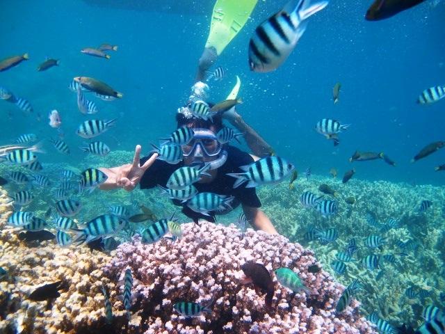 300rb Solo Traveling Ke Karimun Jawa Bisa Kok Oleh Muhammad Alim
