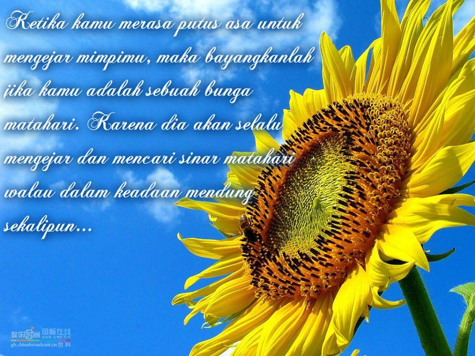Koleksi Kata Kata Indah Tentang Bunga Matahari Cikimmcom