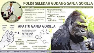 Tembakau Gorilla Dinyatakan Sebagai Narkotika Golongan 1 Kompasiana Com