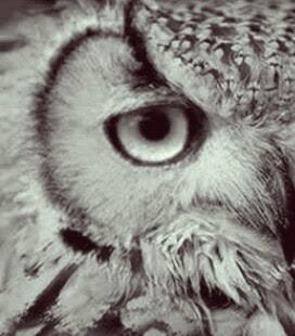 Sami Na Wa Atho Na Di Balik Filosofi Burung Hantu Yang Tak