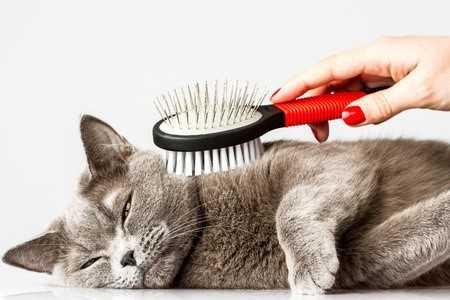 Alasan Mengapa Kita Harus Menjaga Kebersihan Kucing Kucing Kompasiana Com