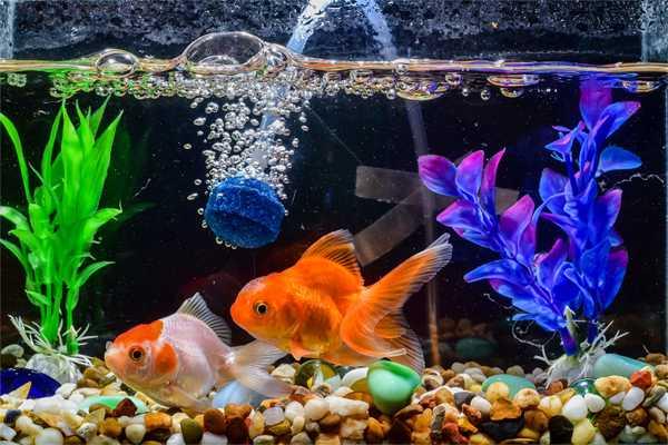 Hilangkan Stres dengan Akuarium Ikan Hias Halaman all - Kompasiana.com