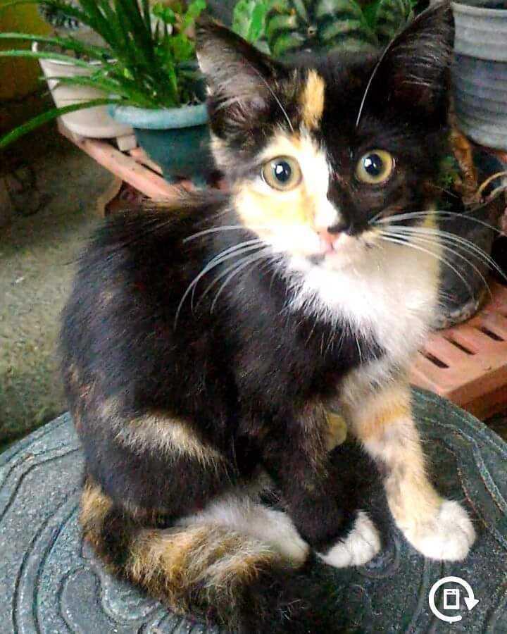 Genetika Di Balik Warna Bulu Kucing Halaman All Kompasiana Com