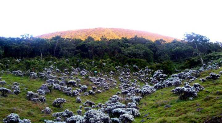 Ladang Edelweiss di Surya Kencana Square gunung Gede   Sumber: Kompasiana