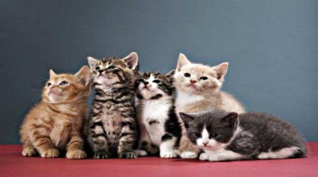 Anak Anak Kucing Bisa Berbeda Ayah Halaman All Kompasiana Com