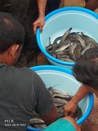 1000 Ekor Ikan Lele Ukuran 7 10 Siap Panen Butuh Berapa Banyak Pelet Dan Berapa Lama Kompasiana Com