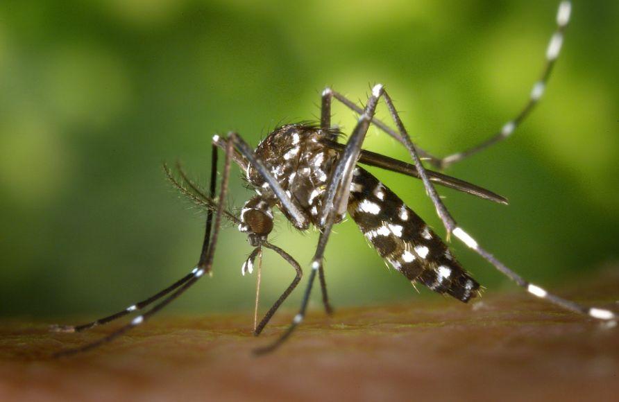 mengusir nyamuk dengan bahan alami