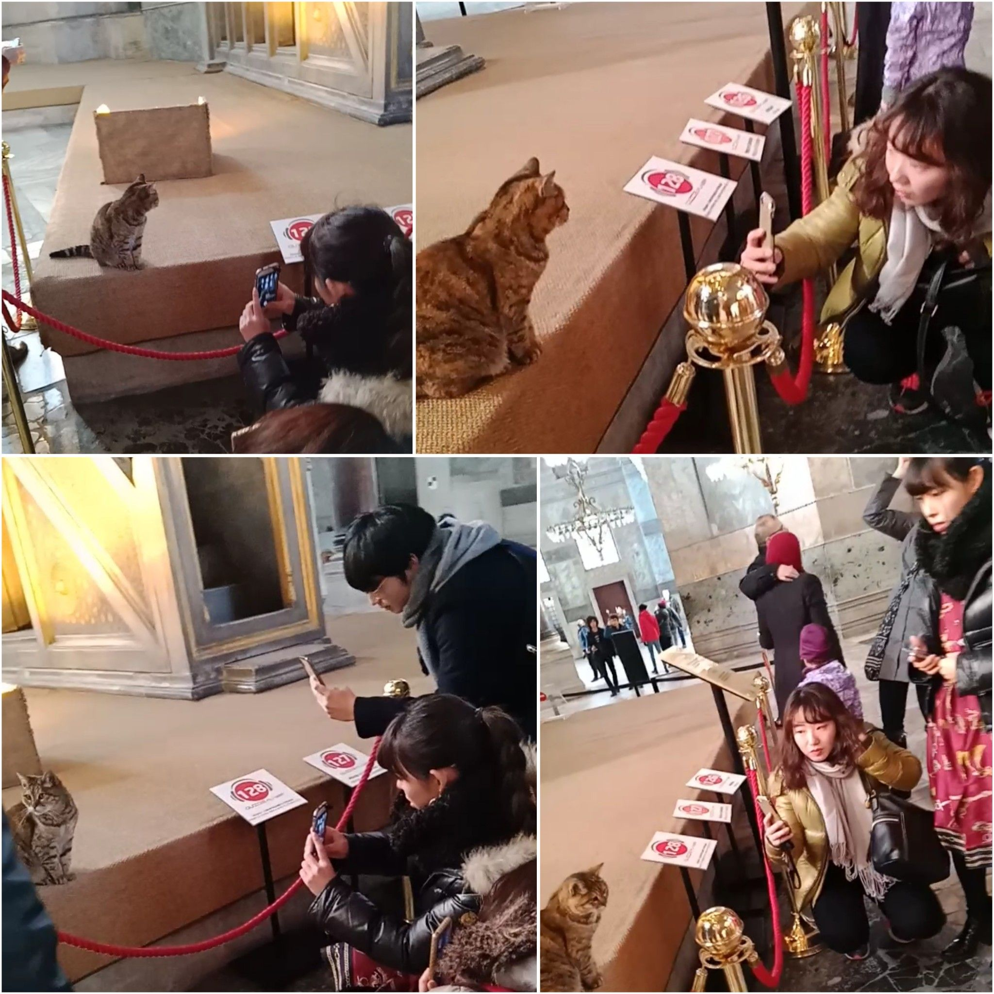 Jika Tak Ada Kucing Istanbul Kehilangan Jiwanya Halaman All Kompasiana Com