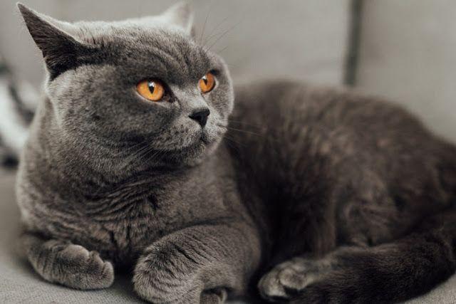 Perbedaan Kucing Berdasarkan Ras Halaman All Kompasiana Com