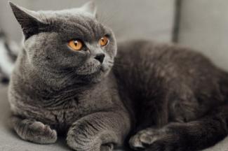 Perbedaan Kucing Berdasarkan Ras Halaman 1 Kompasiana Com
