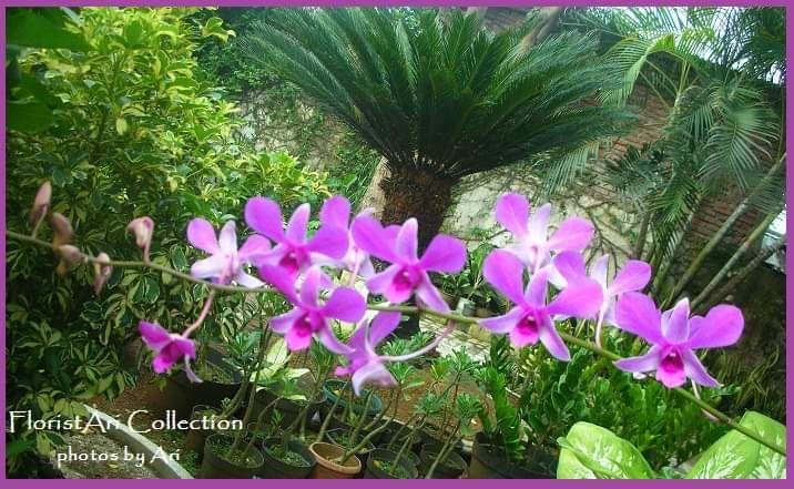 Asyiknya Menanam Aneka Bunga Di Halaman Rumah Halaman 1 Kompasiana Com
