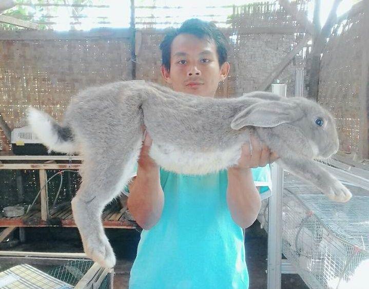 Fiella Rabbitry: Meraup Rupiah dengan Beternak Kelinci ...