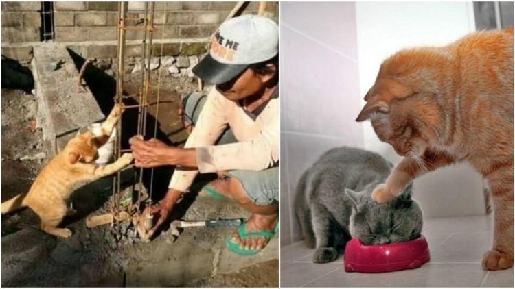 Unduh 66+  Gambar Kucing Eksis Paling Imut HD