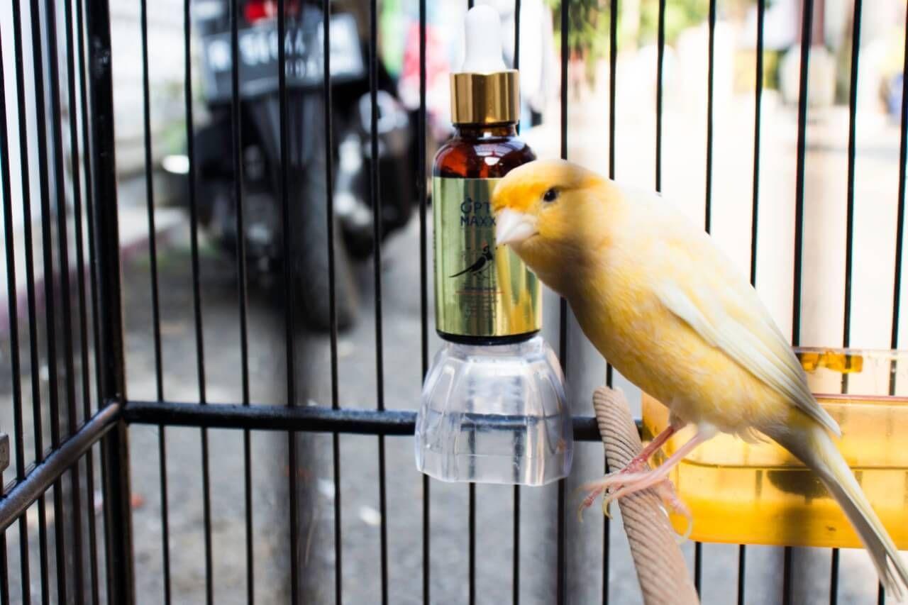Unduh 10100+  Gambar Burung Vitamin HD Terbaik Free