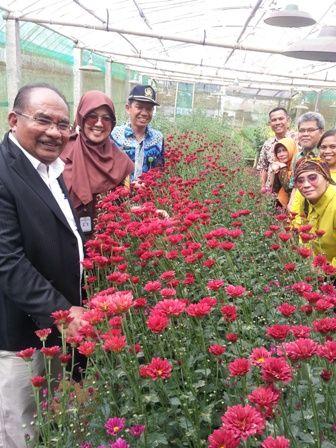 Kebun Bunga Krisan Gerbosari