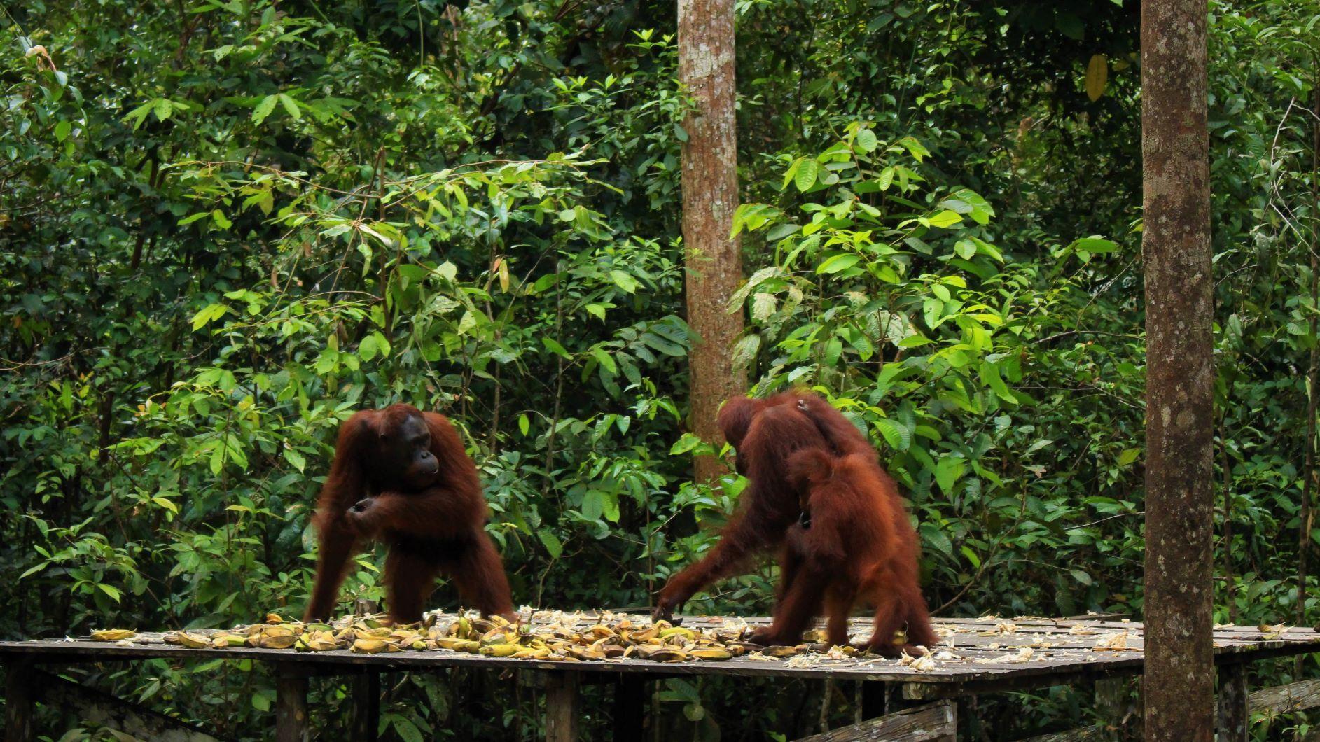 Tanjung Puting National Park, Java Nature and Culture, Komodo National Park Overland 15 Days