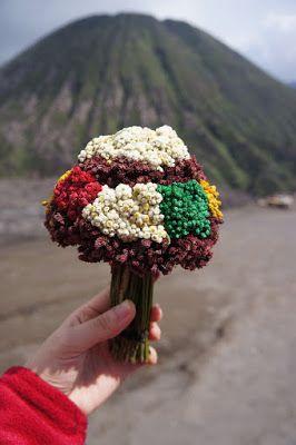 Ternyata Kita Dapat Memiliki Bunga Edelweiss Tanpa Harus Memetik Halaman All Kompasiana Com