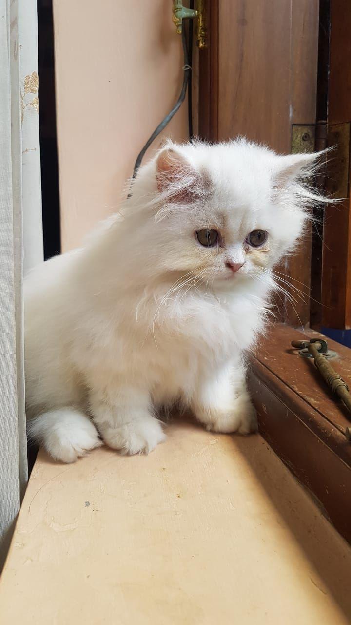 5 Cara Merawat Anak Kucing Pasca Melahirkan Halaman All