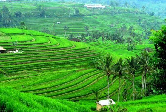 Bagaimana Potensi Pembiayaan Salam Pada Sektor Pertanian Di Indonesia Halaman All Kompasiana Com