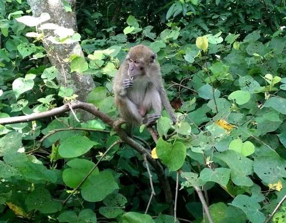Melihat Habitat Monyet Di Taman Wisata Pulau Kembang Kalimantan Selatan Halaman 1 Kompasiana Com