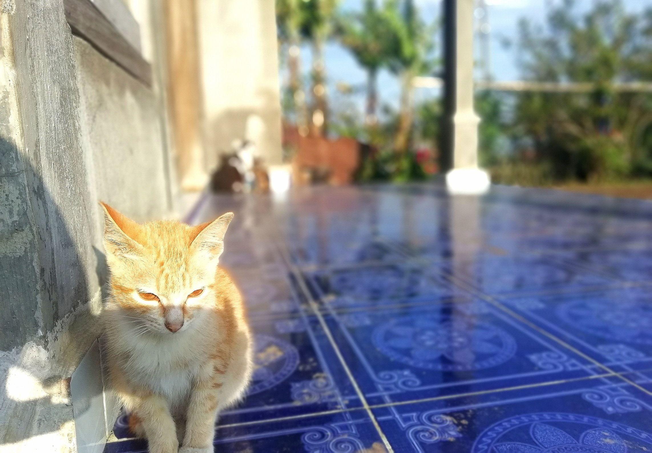 Kami Dan Kucing Kampung Sama Sama Makan Nasi Halaman 1 Kompasiana Com