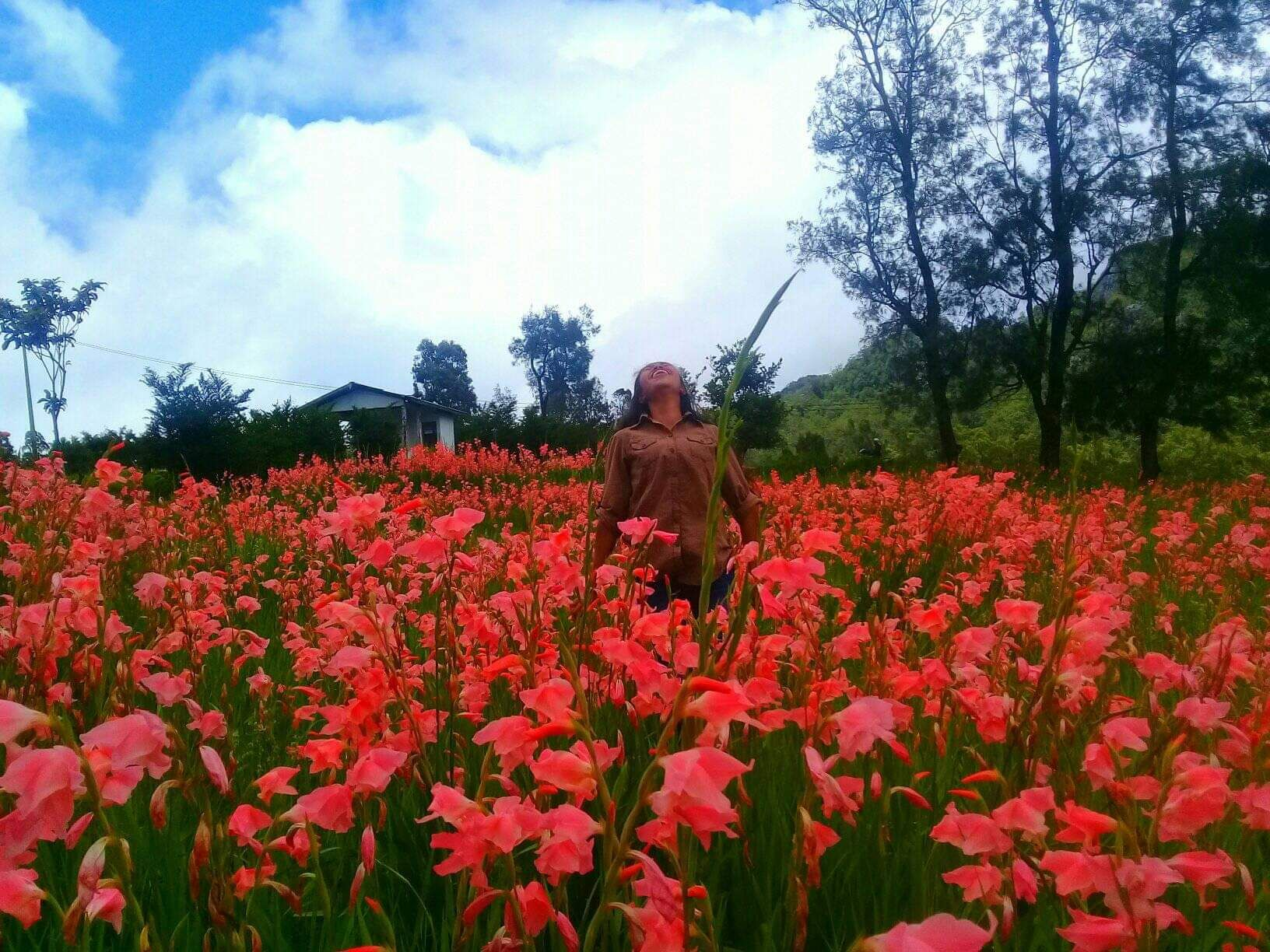 Mekarnya Bunga Gladiol Di Timor Tengah Selatan Kompasiana Com