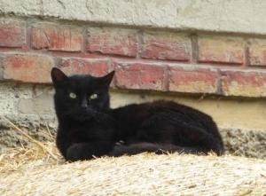 Gambar Ilustrasi Tema Hewan Kesayangan Kucing Hewan Peliharaan Kami Zaman Dulu Yang Sekarang Tinggal Cerita Kompasiana Com