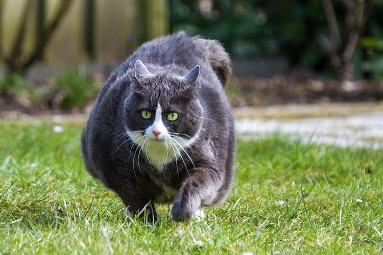 Terbukti 10 Cara Efektif Agar Kucing Bisa Cepat Gemuk Halaman All Kompasiana Com
