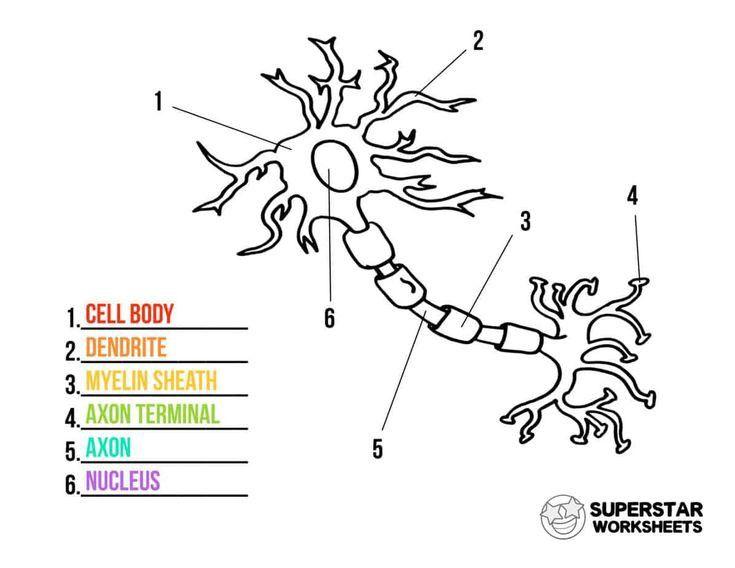 Mengenal Neuron Sebagai Delivery Impuls