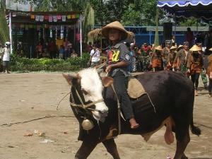 Gerobak Sapi Sebagai Kekuatan Budaya Kaum Tani Liputan Festival Gerobak Sapi  Di Yogyakarta