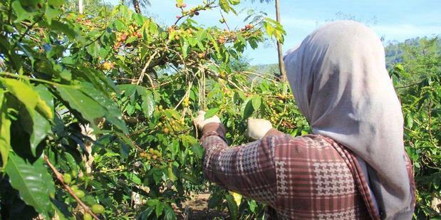 Menyelaraskan Dunia Pendidikan Dan Dunia Kerja Di Bidang Pertanian