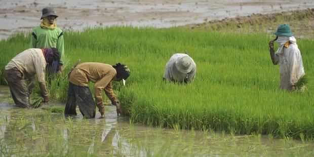 Nasib Sektor Pertanian Di Jakarta Oleh Kadir Ruslan Kompasianacom