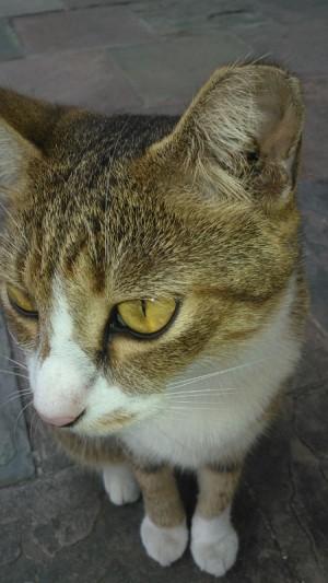 Sudah Ber Kb Kah Kucing Anda Kompasiana Com
