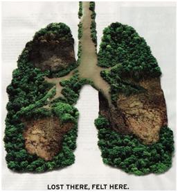 Selamatkan Hutan Sebagai Paru Paru Dunia Yang Sedang Sakit Oleh