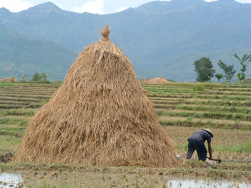 Potensi Biomassa Menjadi Bioetanol Bahan Bakar Alternatif Di Masa