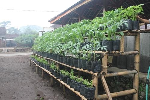 Hasil gambar untuk Berkebun di halaman sempit