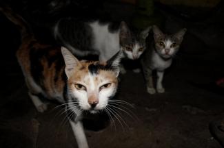 Kucing Kampung Juga Memesona Kompasiana Com