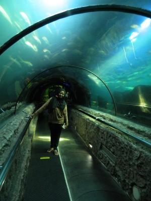 Dunia Ikan Di Jakarta Seaworld Atau Aquarium Air Tawar Kompasiana Com