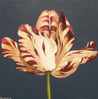 Romantika Tulip Di Bulan Februari Kompasiana Com