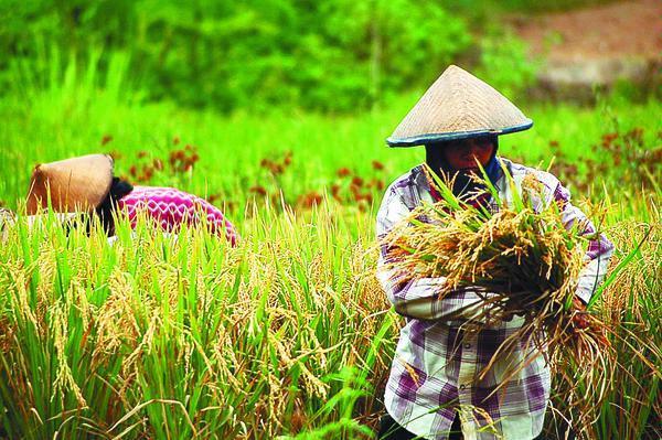 Sektor Pertanian Sebagai Motor Penggerak Perekonomian Negara