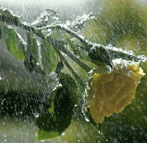 Antara Realita Bunga Dan Hujan Kompasiana Com