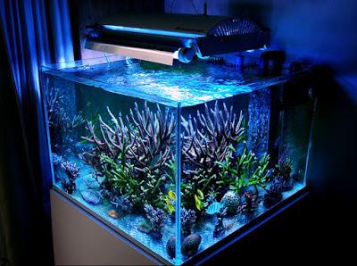 Memelihara Ikan Hias Air Tawar Di Aquarium Halaman All Kompasiana Com