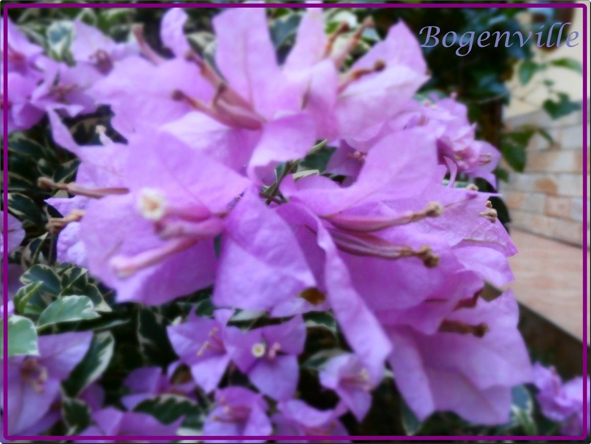 Bunga Kertas Nan Indah Kompasiana Com