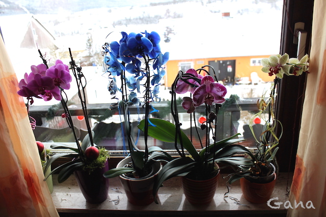 Asyiknya Menanam Anggrek di Dalam Ruangan oleh Gaganawati Stegmann - Kompasiana.com